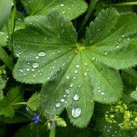 После дождя... :: Дмитрий Петренко