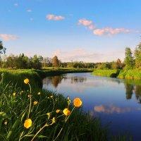 А по берегам Тверцы лютики цветут. :: Павлова Татьяна Павлова