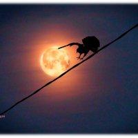 Луна...катилась...под гору... :: Anatol Livtsov