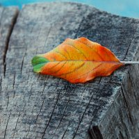 Осень.... :: Алёна Армановна