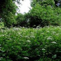 Душистые травы лета. :: Антонина Гугаева