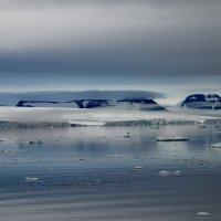 Арктический вечер :: Tatiana Belyatskaya