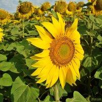 Гармония в природе :: Лидия (naum.lidiya)
