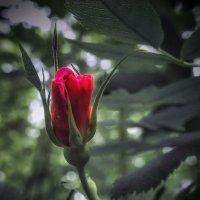 Сердечный цветочек . :: Va-Dim ...