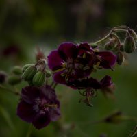 садовые цветы :: Ольга @