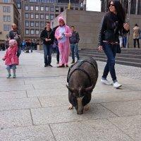 Свиньи в городе :: Alexander Andronik