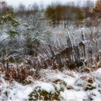 Осенний снег :: Александр Максимов