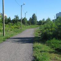 Окрестности Ласнамяэ :: Владислав