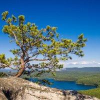 Между синим и синим мир зелёного цвета :: Nataliya Belova