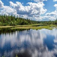 Озеро среди тайги :: Дмитрий Сиялов