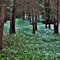 Весна в горах :: Сергей