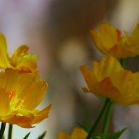 цветы. :: Пётр Беркун