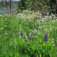 Цветочная полянка на берегу моря :: Маргарита Батырева