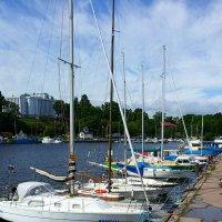 Финский залив :: Galina Belugina