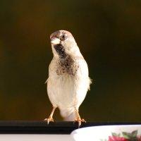*** :: linnud