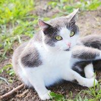 Случайный  деревенский  кот :: Наталья Чернушкина
