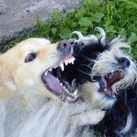 """"""" страшные"""" собаки :: Лариса Батурова"""