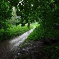 Попытка спрятаться от дождя :: Андрей Лукьянов