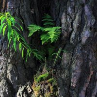 Капризы матушки природы... :: Лесо-Вед (Баранов)