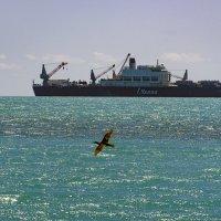 Судно-трубоукладчик Pioneering Spirit (длина 382 метра, ширина 124 метра) в Черном море :: Инна Голубицкая