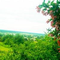 Непонятное красное дерево :: Valentina Ariel