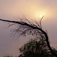 Сквозь туман пробивается солнце. :: Elena Sartakova