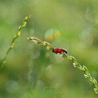Beetle and rainbow! :: Ольга Егорова
