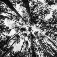 Тёмный лес :: Роман Шершнев
