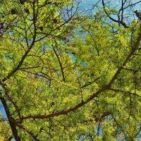 Цвета Весны... :: Sergey Gordoff