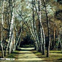 Славянский курорт :: Майя Морозова