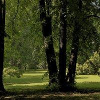 Старые липыю Ботанический сад :: Наталья Лунева