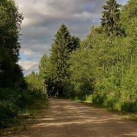 Лесная дорожка :: Владимир Гилясев