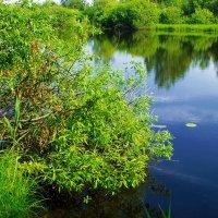 Озеро Боярское. :: Ирина