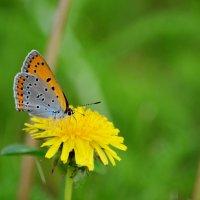бабочка :: Наталья Слисаренко