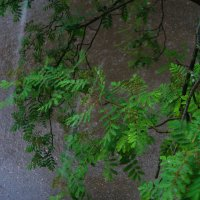 За окошком дождик :: Юрий