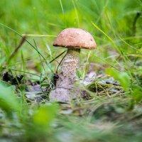Лесной красавчик)))..... :: игорь козельцев