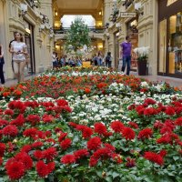 Место, где можно гулять при любой погоде. :: Татьяна Помогалова