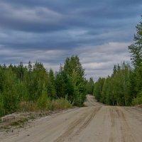 Лето в Западной Сибири :: Дмитрий Сиялов