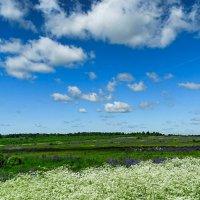 Цветочное поле :: Милешкин Владимир Алексеевич