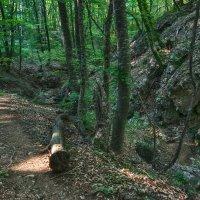 Тропинка в крымском лесу :: Игорь Кузьмин