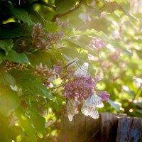 Вечер и бабочки :: Лариса Сливина