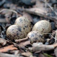 гнездо :: Yuri Mekhonoshin