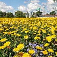 Полевые цветы июня :: Николай Белавин