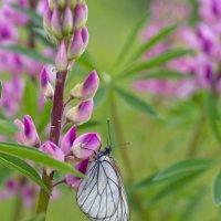 Бабочка и цветок. :: Анатолий Стафичук