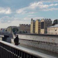 Обводный канал в Санкт-Петербурге :: Фотогруппа Весна.