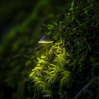 Волшебный гриб ночник :: Алексей Строганов