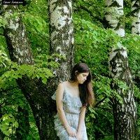 На лесной полянке. :: Сергей Гутерман