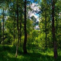 Солнышко над лесом :: Юрий