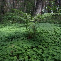 прогулка по лесу 1 :: Евгений Вяткин