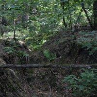 прогулка по лесу 4 :: Евгений Вяткин